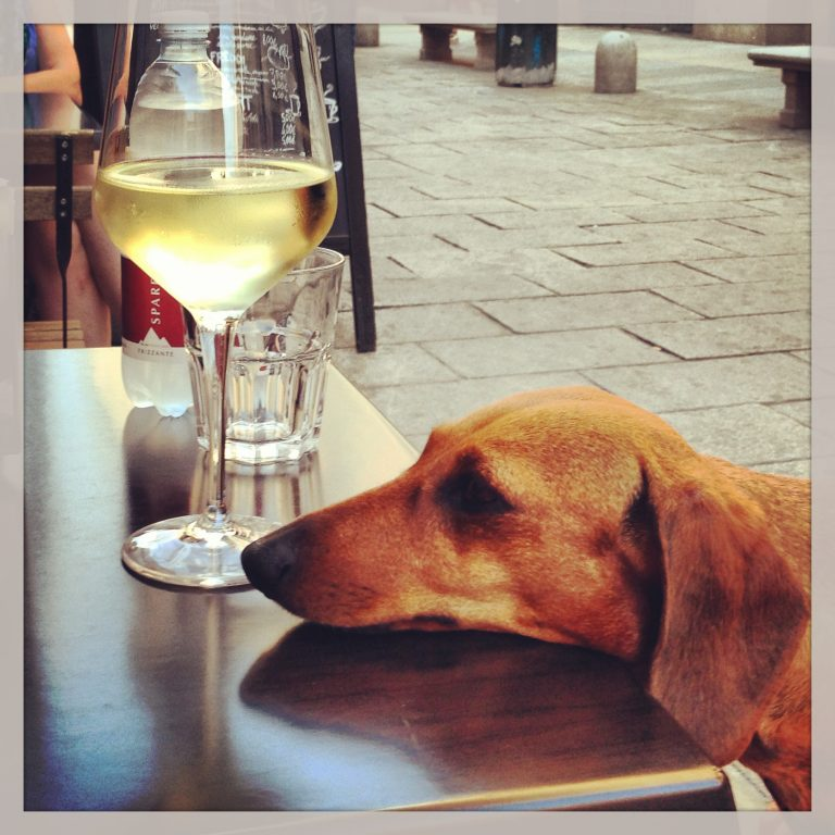 After a long day of walking and exploring, an exhausted Cotta dog and a glass of erbaluce.