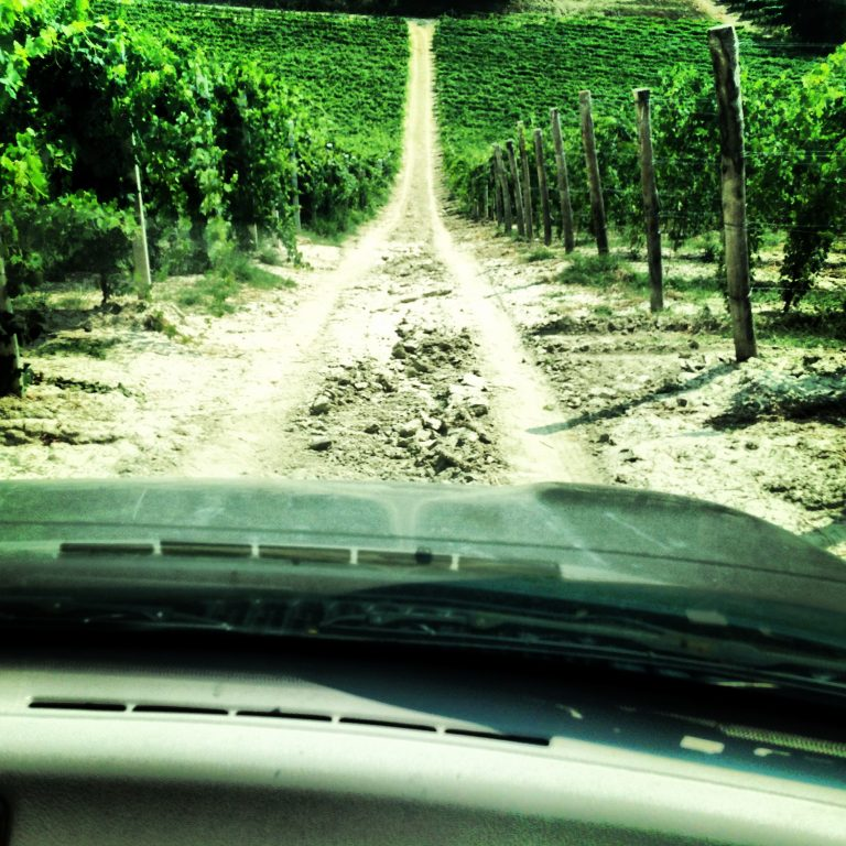 ABC Guide to Piemonte Wine: Off-roading in the Vineyards