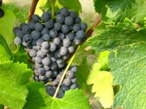 ABC Guide to Piemonte Wine