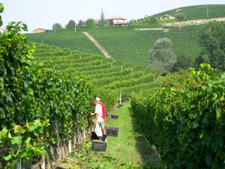 ABC Guide to Piemonte Wine: Indigenous Grapes