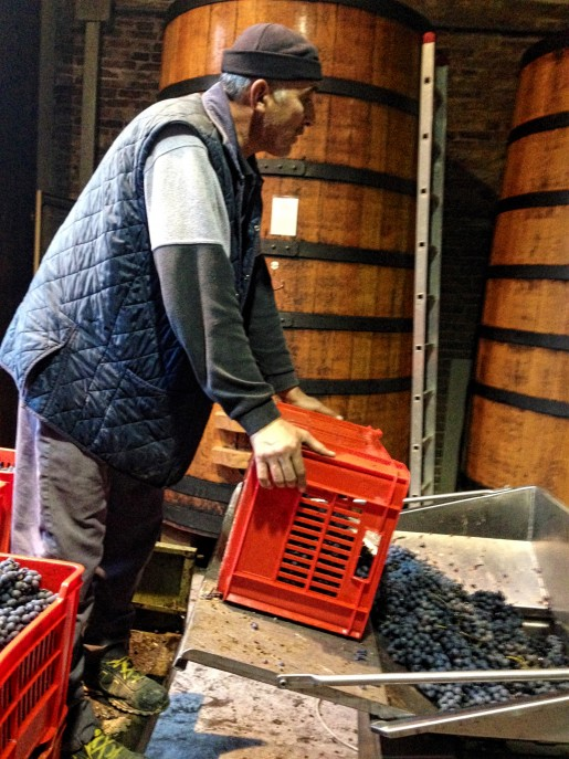 Barolo Harvest at Bartolo Mascarello