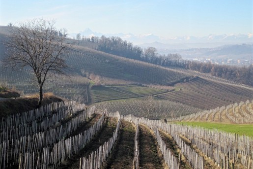 Langhe Vineyards in Barbaresco