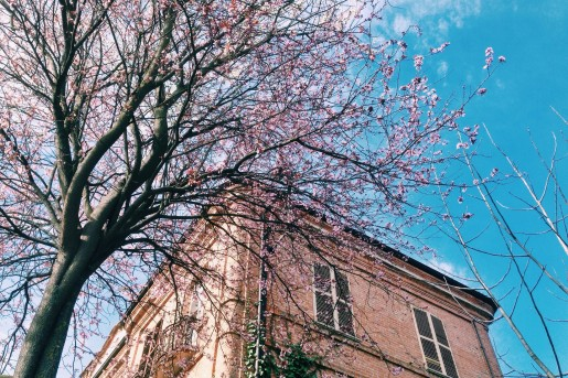 Piedmont, Neive village, Spring