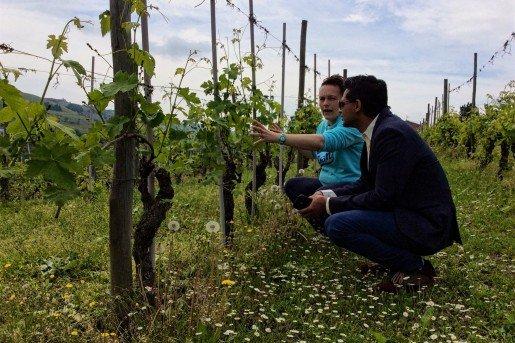 Barbaresco vineyard walk