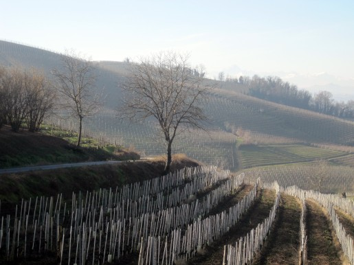 Barbaresco vineyards, Piedmont