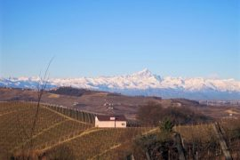 Langhe Vineyards with Monviso
