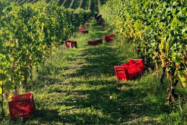 when to visit piedmont italy