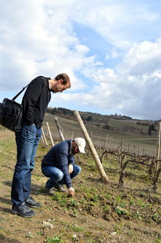 Italy Wine Country Chianti