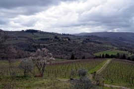 Italy Wine Country Travels
