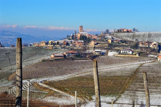 Nebbiolo Vineyards Barbaresco