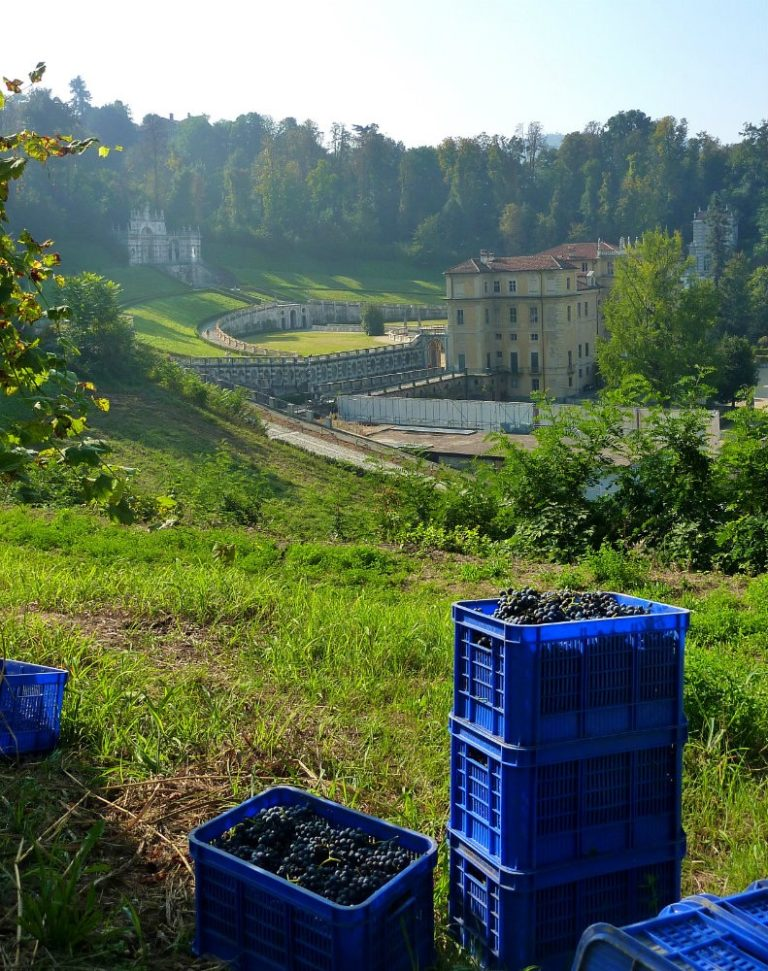 Queen's Villa Vineyard Turin