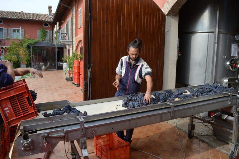 Barolo 2016 Harvest Paolo Manzone