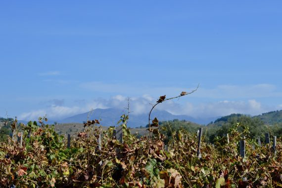mount etna wine