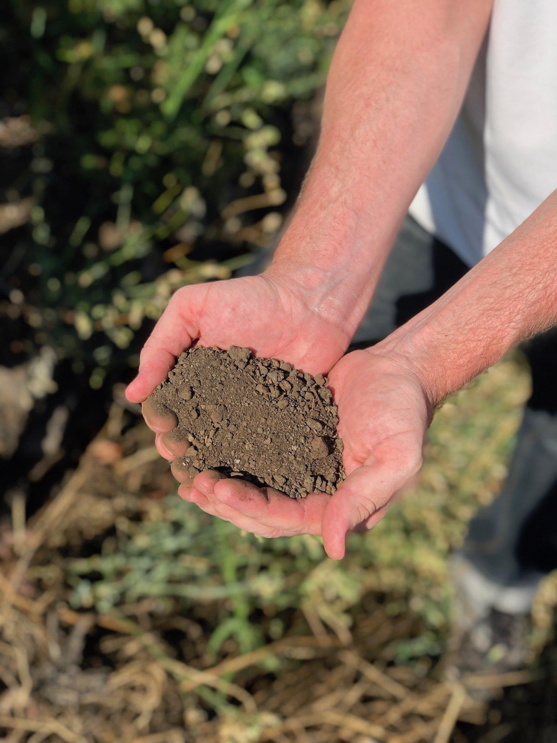 etna volcanic soil